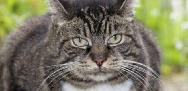 Впервые в мире человек заразился туберкулезом от кота