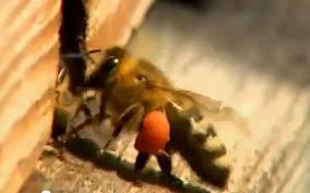 Пчелы, несущие красоту и здоровье