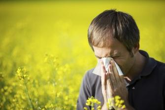 Созданы таблетки от аллергии на амброзию