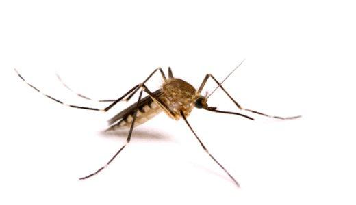 Боремся с комарами