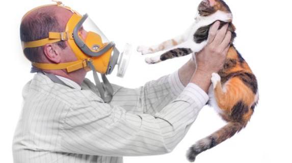 Лекарство от аллергии на шерсть животных. Ученые обещают
