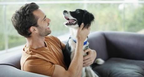 Домашние животные – переносчики болезней