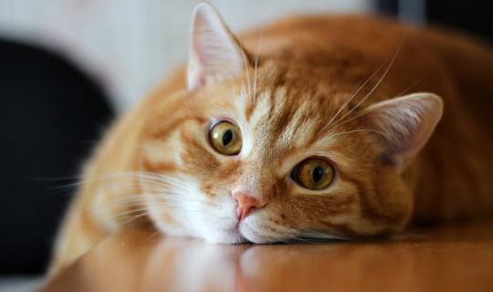 Кастрация кота без последствий