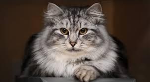 Непоседливый питомец, или домашняя кошка