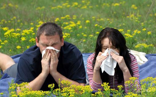 Эксперты: аллергия быстро становится проблемой каждого третьего жителя