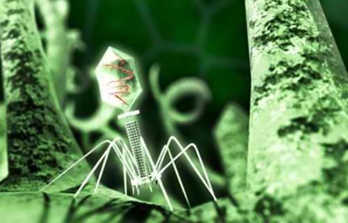 В кишечной микрофлоре половины населения Земли нашли новый вирус