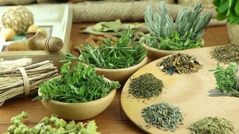 Какие есть травы, повышающие иммунитет