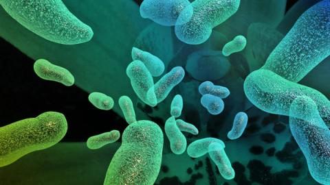 Новый вирус в кишечной микрофлоре во всем виноват