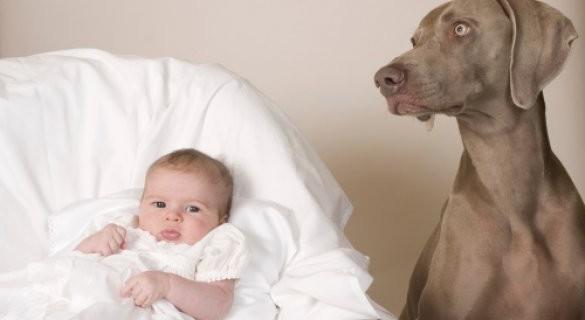Опасность домашних животных для новорожденных