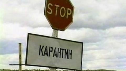 В свинине из Белоруссии нашли вирус чумы