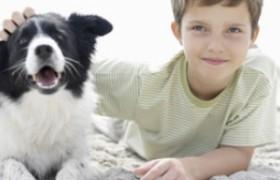 На развитие астмы у детей домашние животные не влияют