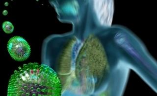 Иммунная система может частично распознавать вирус H1N1