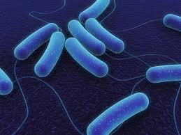 Скоро бактерии станут угрозой №1