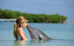 О дельфинотерапии