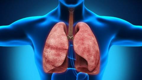 Разработан новый метод МРТ-диагностики легких