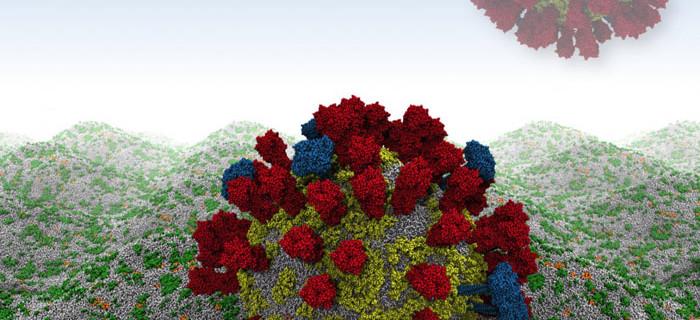 Ученые впервые смоделировали наружную вирусную оболочку