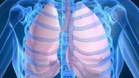 Ученые выяснили, как очистить легкие от канцерогенов