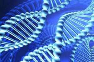 До 17% случаев рака вызваны инфекциями