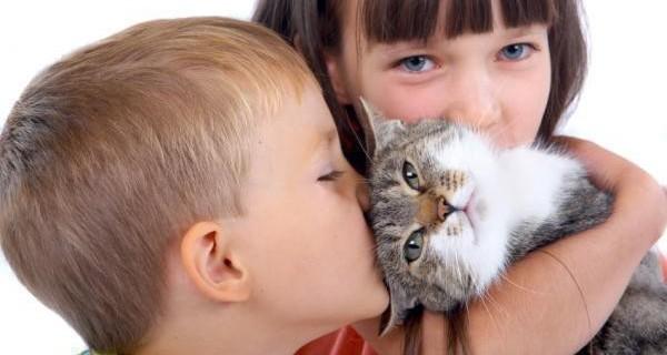Домашние любимцы как источник инфекции