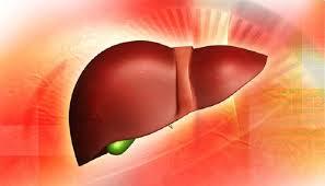 Гипогликемическое средство лираглутид оказалось эффективно против неалкогольного стеатогепатита