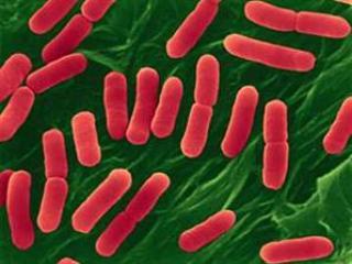 Туберкулез — забытая болезнь?!
