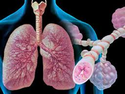 Профессиональная бронхиальная астма