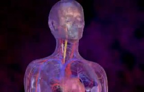 Пневмония, вызванная синегнойной палочкой
