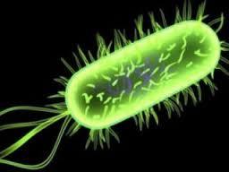 Симптомы и лечение цитомегаловирусной инфекции