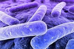 Ученые нашли причину, по которой организм не может защититься от туберкулеза