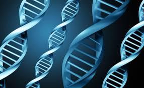 Найден ген, ответственный за развитие врожденного иммунодефицита