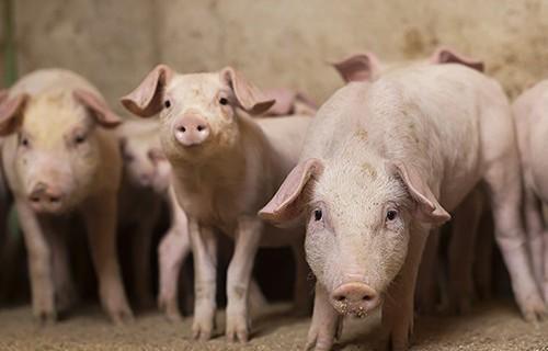 Житель Нового Уренгоя скончался от свиного гриппа