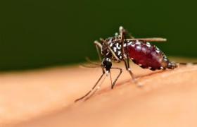 Более 40 тысяч человек на Тайване заразились лихорадкой денге