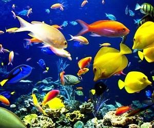 Рыбки и земноводные помогут при сифилисе