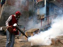 Эпидемиологи опасаются мировой эпидемии вируса Зика