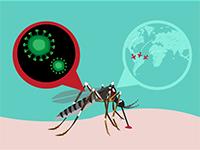На Кубе зафиксирован первый местный случай инфицирования вирусом Зика