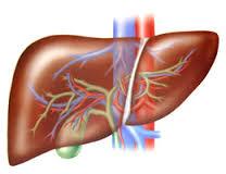 Гепатиты: что надо знать
