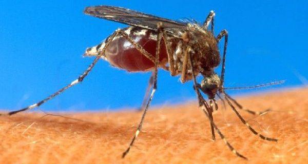 Ученые обещают новые лекарства от малярии