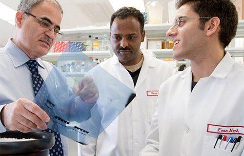 Геном ВИЧ-инфицированных животных был успешно отредактирован