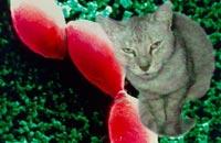 Что нужно знать о токсоплазмозе?