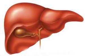 Алкогольный гепатит: признаки, диагностика, лечение