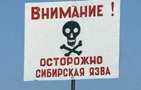Сибирская язва на Ямале: это опасно?