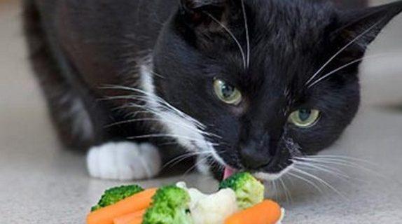 Питание кошек – что должен знать каждый хозяин