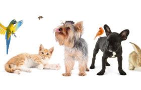 Лучшие специалисты ветеринарной клиники «Био-Вет