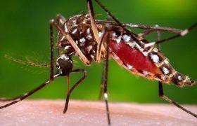 Вирус Зика негативно влияет на мужскую фертильность