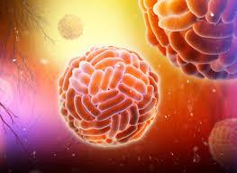 Стрептококки и пневмококки выживают на поверхностях даже после дезинфекции
