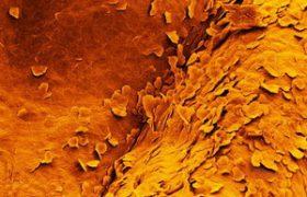 Лечение венерических заболеваний народными средствами