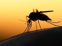 Детей Африки привьют против малярии в рамках пилотного проекта ВОЗ