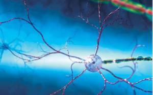 Цитомегаловирус заставляет опухоль мозга расти быстрее