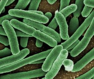Клетки спермы впервые получены из костного мозга