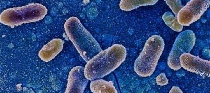 Новую форму сальмонеллы создал ВИЧ